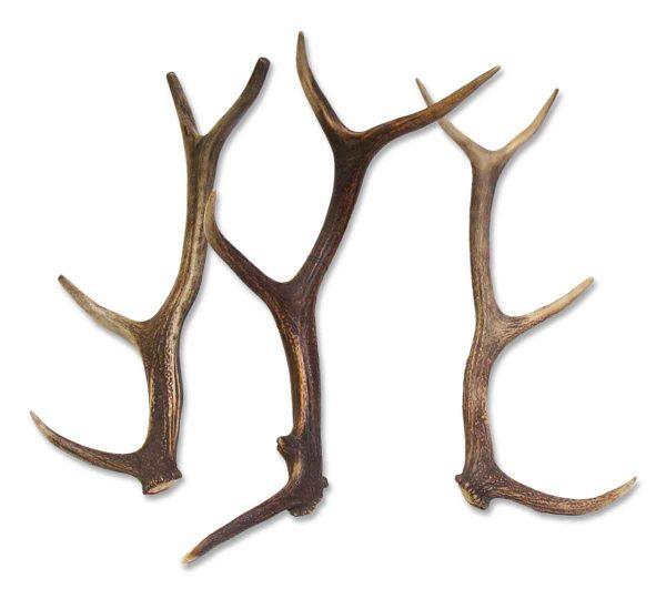 Loose Antlers
