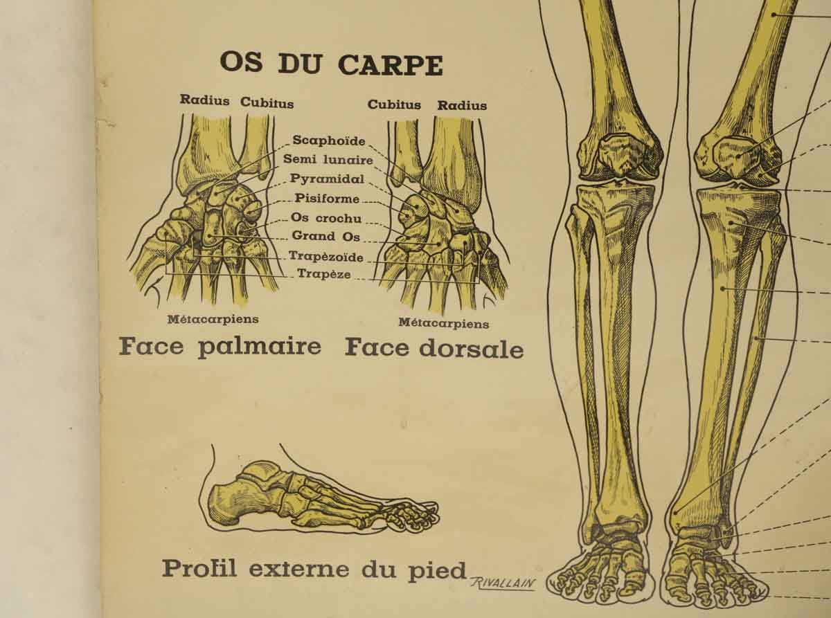French Double Sided Human Skeleton Poster | Olde Good Things