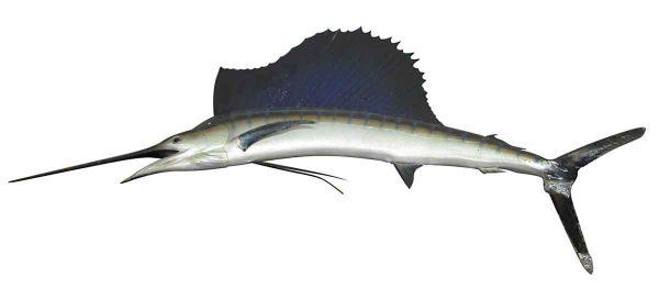 Mounted Marlin