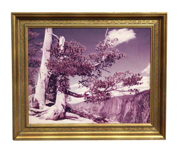 Ornately Scenic Framed Purple Hue Photo