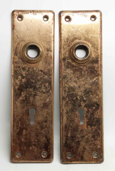 Brass Pressed Back Plate