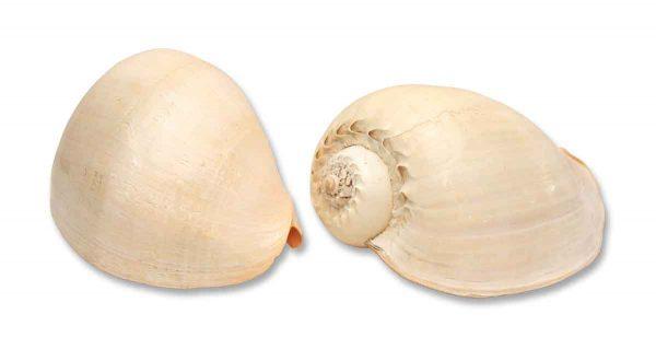 Matching Pair of Jumbo Shells - Nautical Antiques