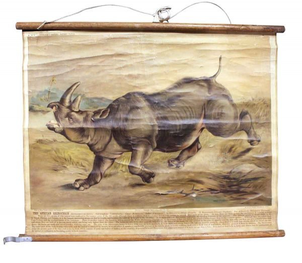 Posters - Imported Vintage Rhino School Poster