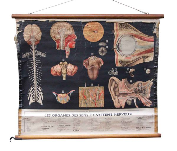 Posters - Vintage Imported Nervous System School Poster