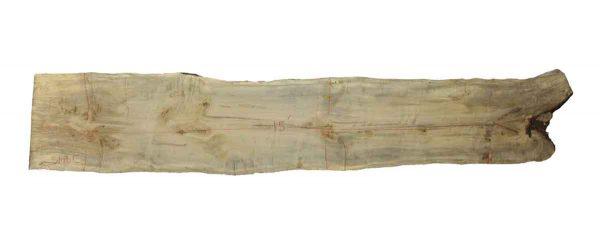 Live Edge Wood Slabs - 15 Foot Spalted Maple Slab C