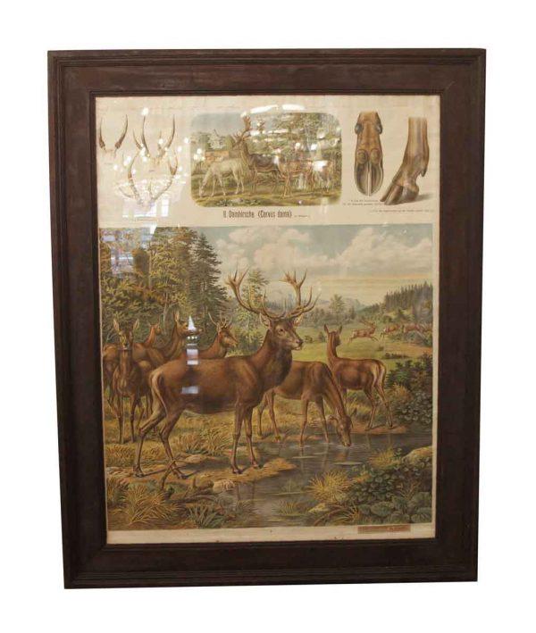 Posters - Vintage Imported Framed Deer School Poster